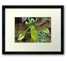 Lime Green Orchid Framed Print