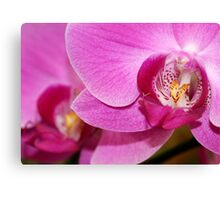 Hot Pink Macro Orchids Canvas Print