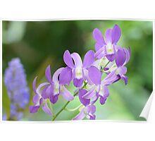 Light Purple Orchids Poster