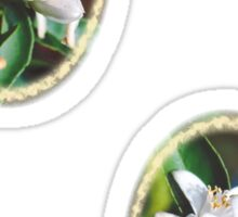 Citrus flowers Sticker
