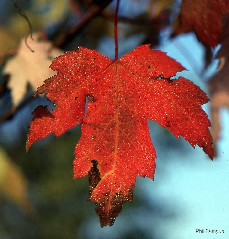 Autumn Leaf by Phil Campus