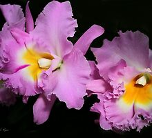 ONLY ORCHIDS by SABRINA L RYAN by Sabrina Ryan