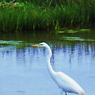 Egret by schiabor