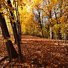 Memories Of Autumn by Curtiss Simpson
