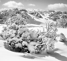 New snow, Perisher Valley by Jan Glover
