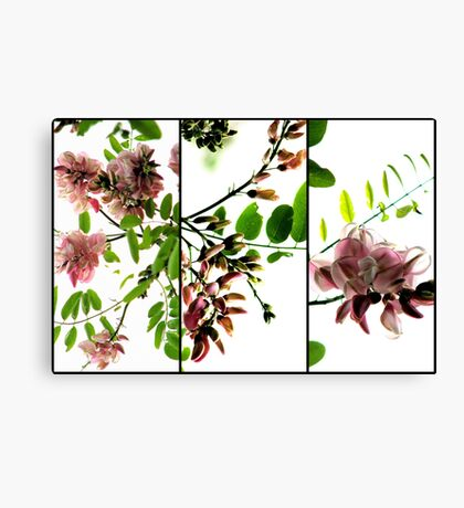 Robinia - Triptych Canvas Print