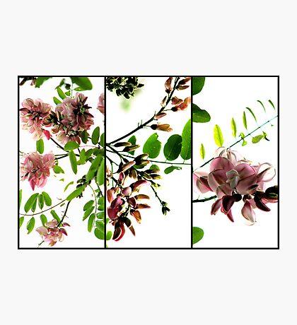 Robinia - Triptych Photographic Print