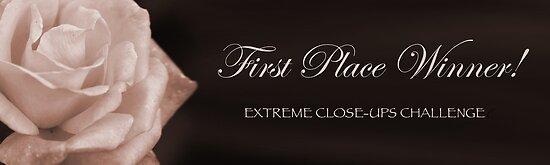 Banner for extreme close-ups group winners banner challenge by MistyIslet