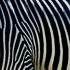Zebra by George I. Davidson