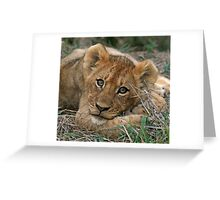 A young lion cub(This is the life!) Greeting Card