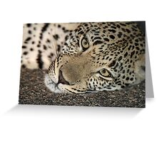 A cosy young leopard(It`s nice and cool on the tar!) Greeting Card