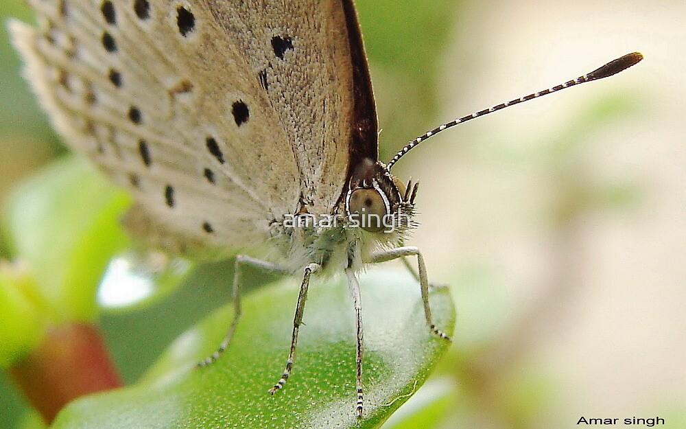 Sad butterfly by amar singh