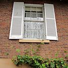 The Window by Lunaria