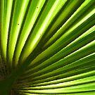 Fan Palm Frond by Ginny Schmidt