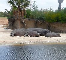 Lazing hippo's by jazzyd