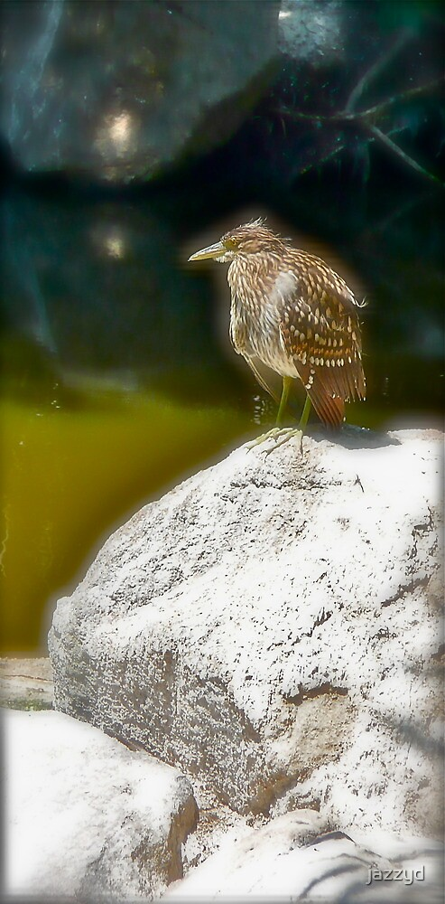 Bird on a rock by jazzyd