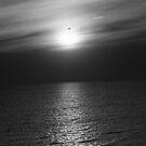 Bird Over Sun by MichaelCouacaud