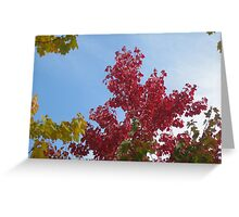 Against a blue sky Greeting Card