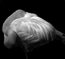 Flamingo (B&W) by Robin Lee