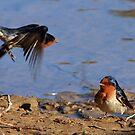 two birds by Maureen Clark