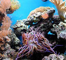 Ocean Life by Robin Lee
