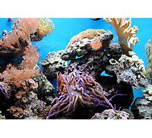 Ocean Life Photographic Print