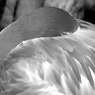 Flamingo 3 (B&W) by Robin Black