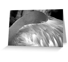 Flamingo 3 (B&W) Greeting Card