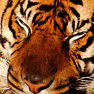 Tiger Face by Robin Black
