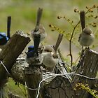 5 Wrens???!!! by Ron Co