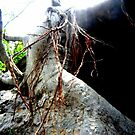 Roots coming from the heaven going up side down by True Cinema Movement