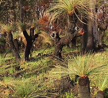 Blackboys in the Bush. by John Sharp