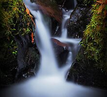 Pieces of Pacific Crest Falls II by Tula Top