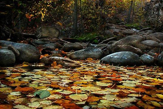 Autumn Falls by John Poon