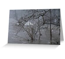 Gumballs Above the Winter Flood Greeting Card