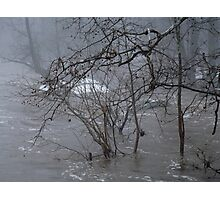 Gumballs Above the Winter Flood Photographic Print