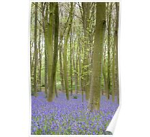 Bluebell Woods, Micheldever Forest Poster