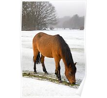 New Forest pony in snow Poster