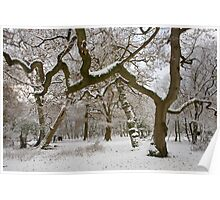 New Forest snow Poster