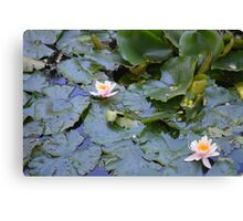 Nature Emerging  Canvas Print