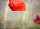 And we shall remember them....... by Lynda Heins