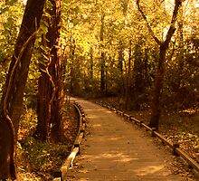 Golden Hours Along a Forest Path by Jay Reed