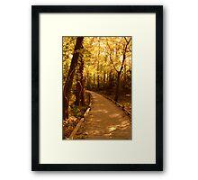 Golden Hours Along a Forest Path Framed Print