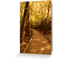 Golden Hours Along a Forest Path Greeting Card