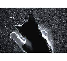 Kitten Chasing Snowflakes Photographic Print
