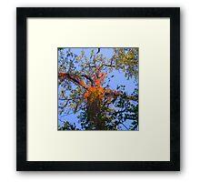 Canopy Framed Print