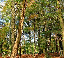 Nachtegalen Park - Antwerp - Belgium by Gilberte