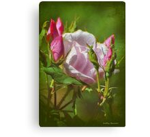 Textured Pink Rose & Buds Canvas Print