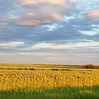 Wheat Field - Grande Prairie, Alberta by mattnnat