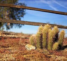 Cactus - Arizona by mattnnat